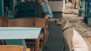 10 pet-friendly restaurants - pawfect!
