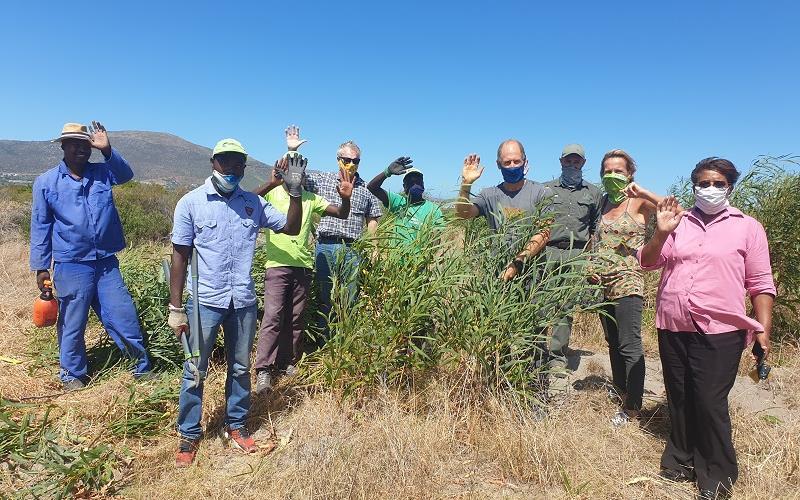 Green fingers clear invasive species at Noordhoek Wetland