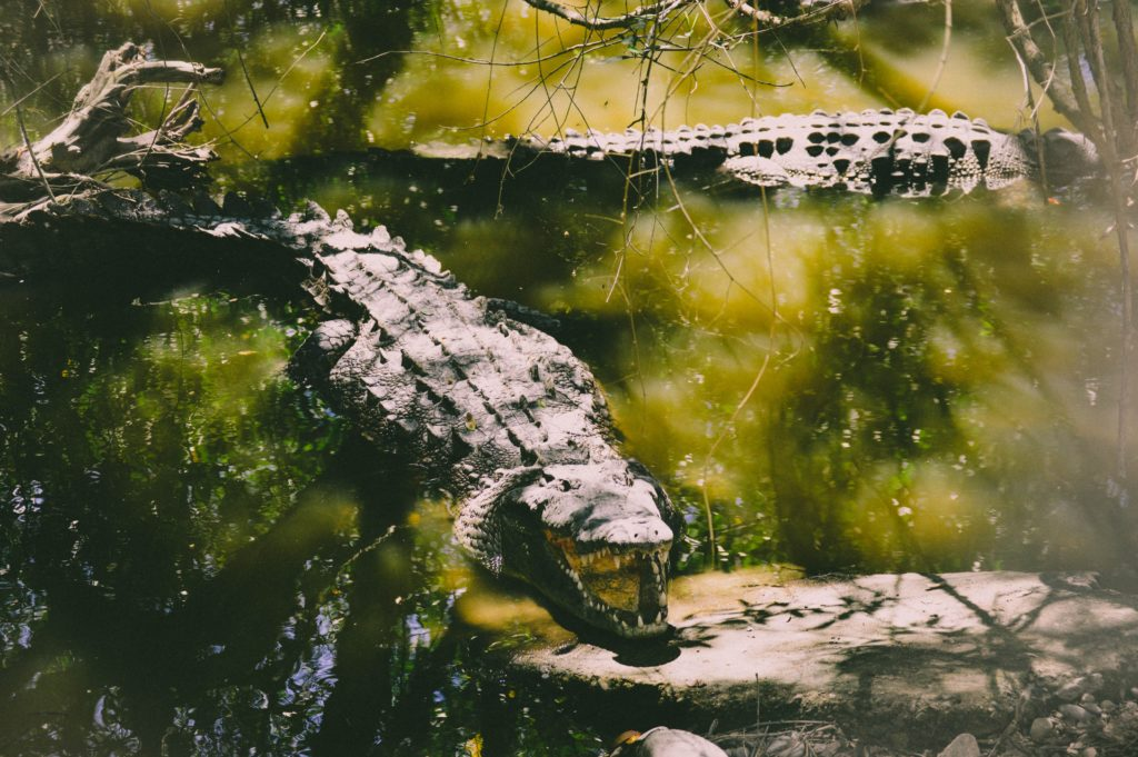 Avoid the Breede River, there are crocodiles on the loose...