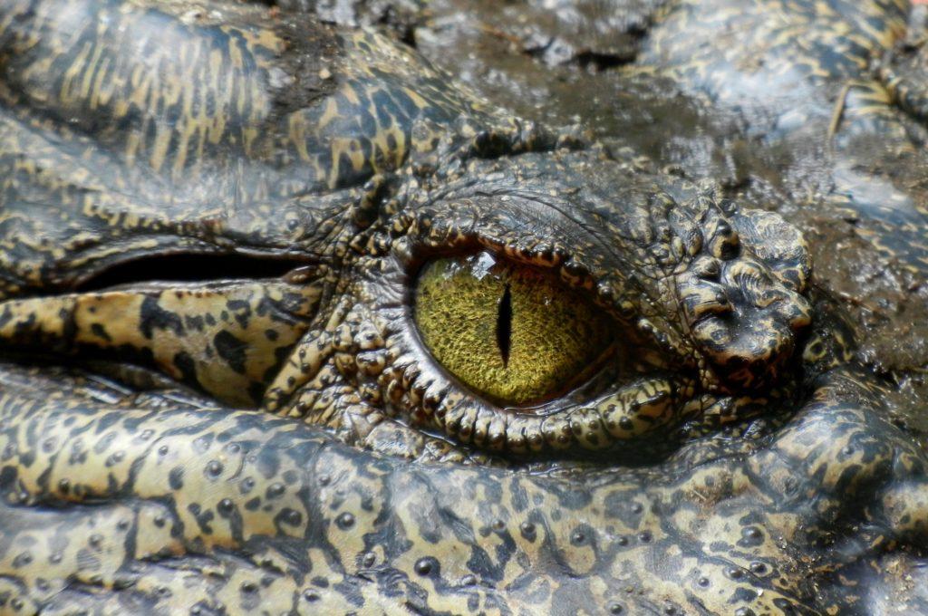 More Bonnievale crocs sentenced to death