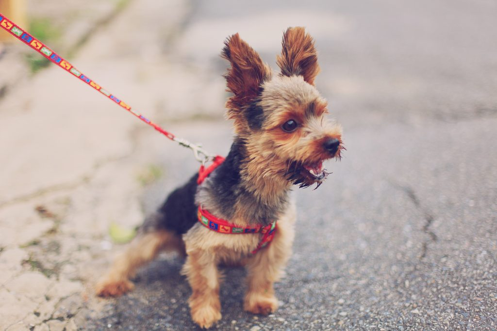 Dog owners can be fined R20 000 if pet barks for 6 minutes