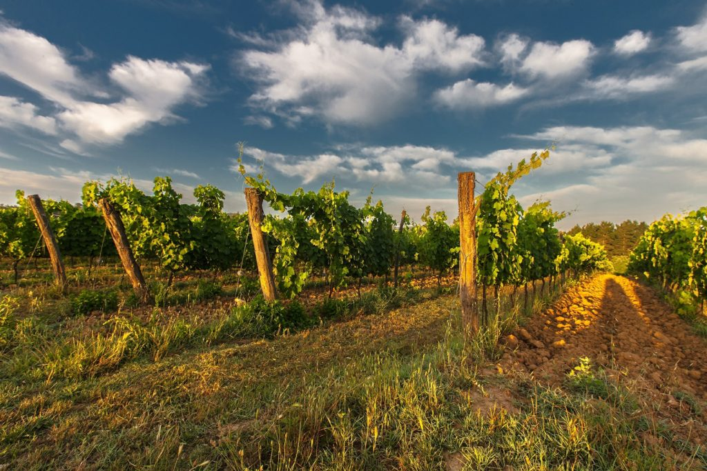 Wine industry suffers an estimated loss of more than R8 billion throughout lockdown