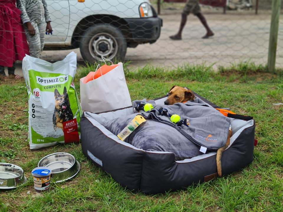 Whiskey: Donations pouring in for the dog who had South Africans in tears