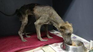 Animal Welfare Society - Kuhle