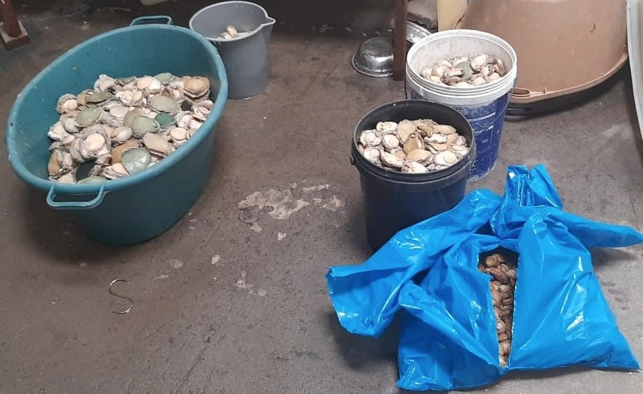 Police confiscate R3 million worth of abalone in Bishop Lavis