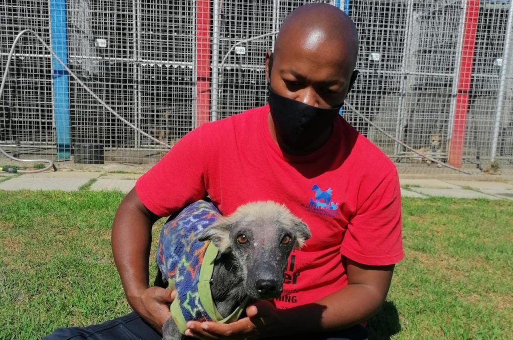 An update on Kuhle the warrior