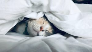 Sleep deprived? How to reset your circadian rhythm