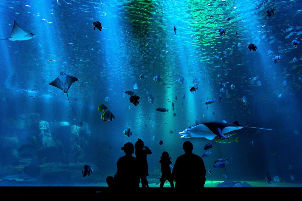 Two Oceans Aquarium brings the sea to our screens