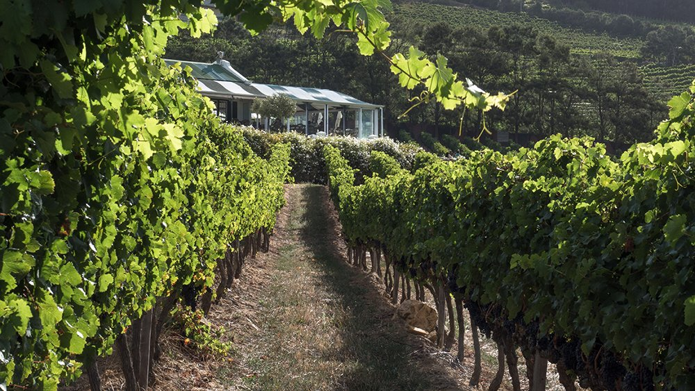 Catch the views and linger at Constantia Glen