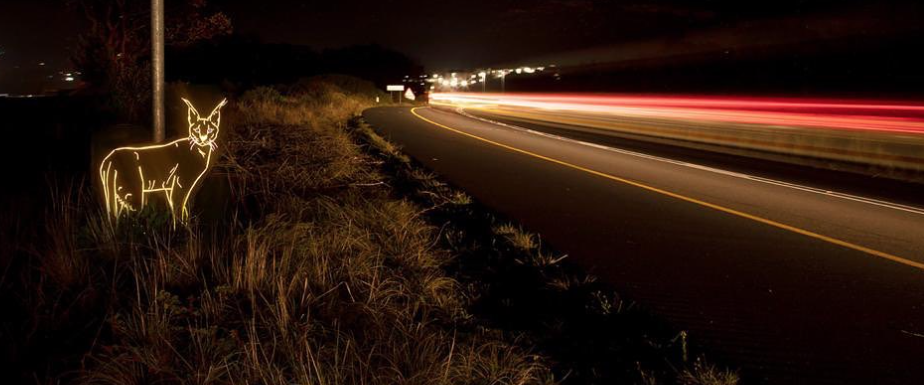 Illuminated artworks designed to protect Caracals on the roads