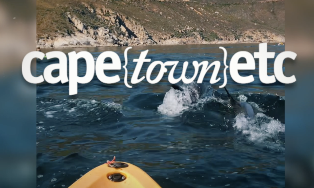 WATCH: Kayaking with dolphins in Hout Bay
