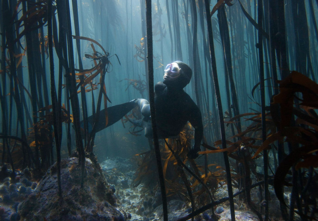 Cape kelp forests named one of the Seven Wonders of the World