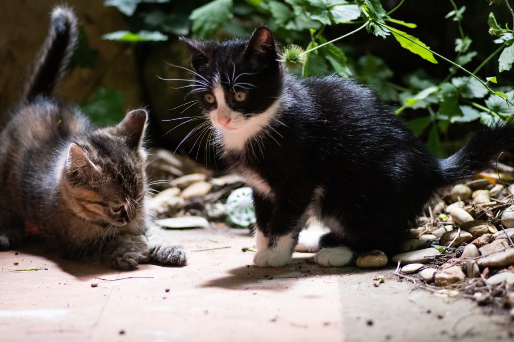 Cat owners warned about a deadly virus on the Cape Flats