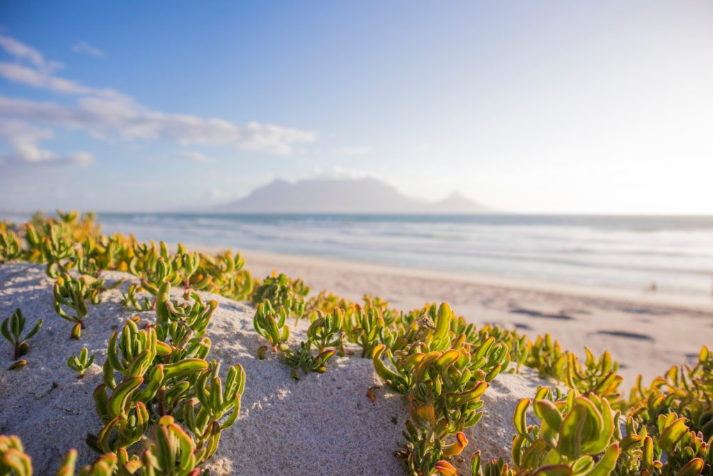 Cape Town summer