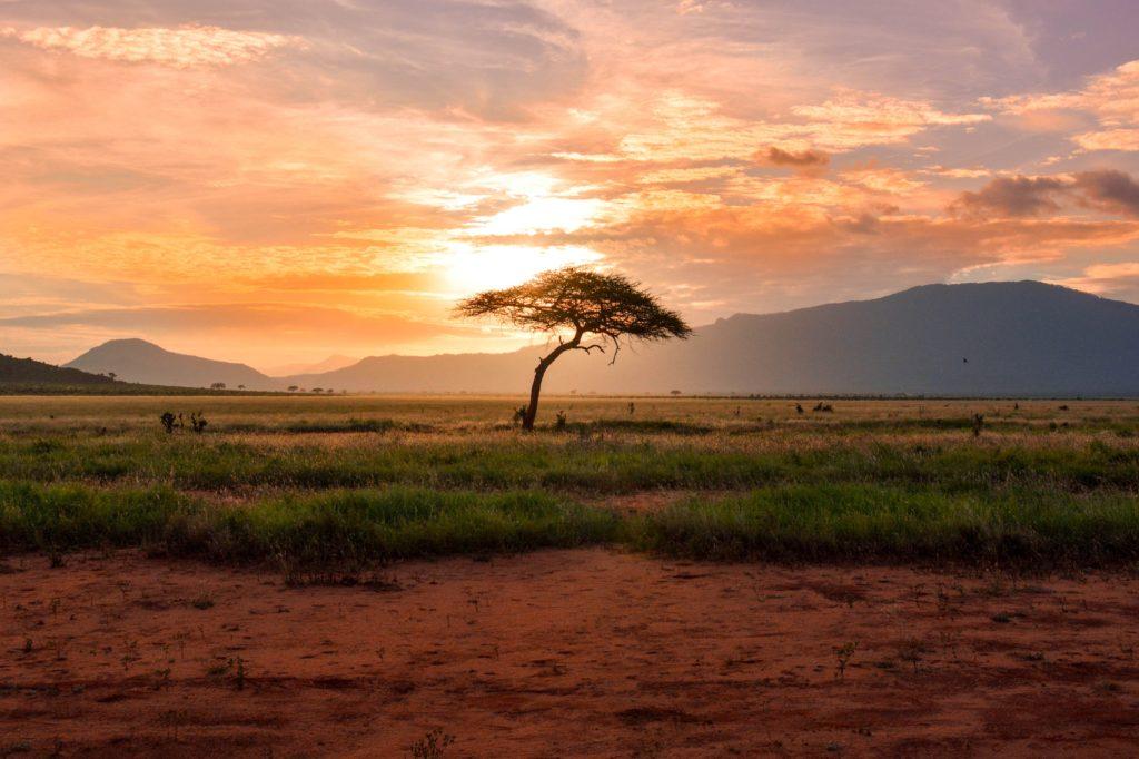 World Africa Day