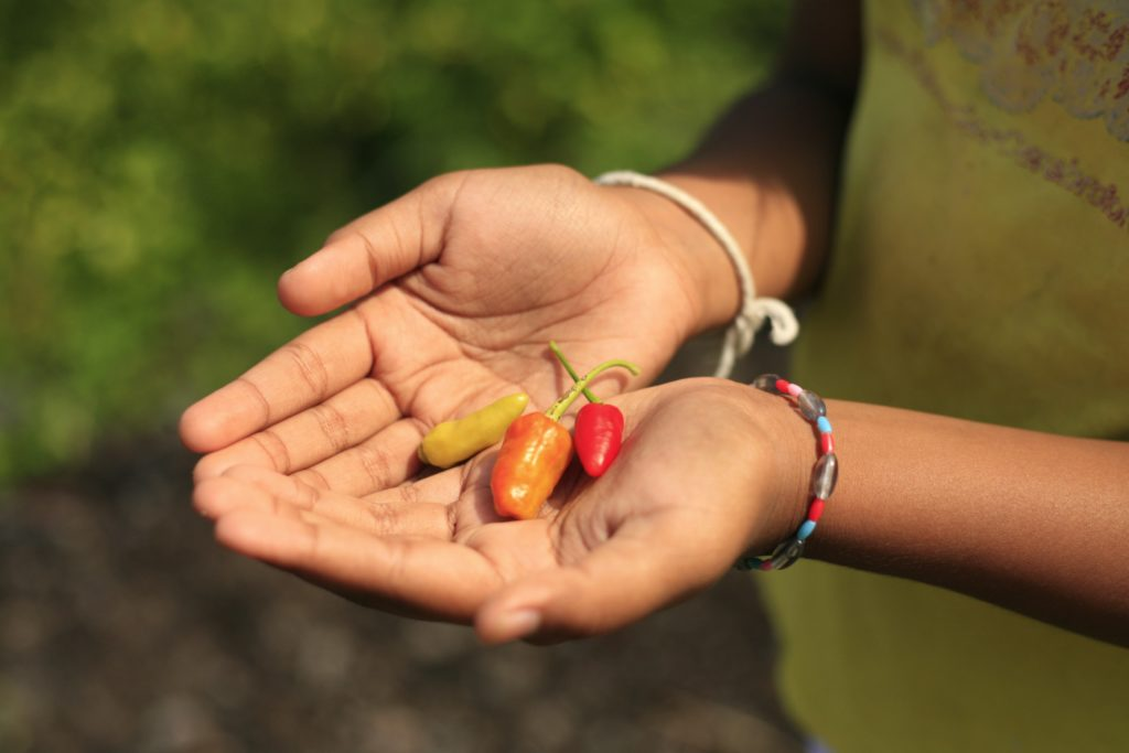 Nando's x RAIN give back to the village that grows their famous chillies