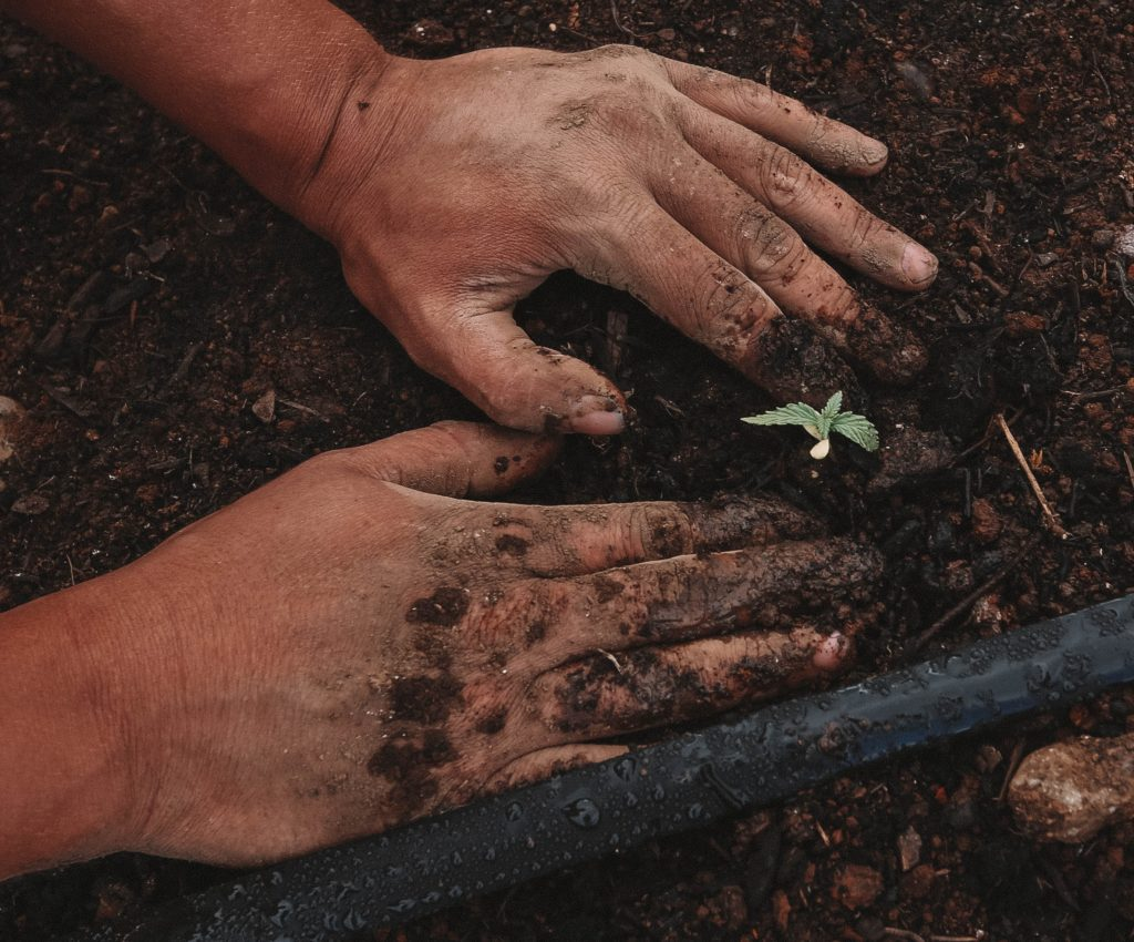 Community plants trees for lost loved ones
