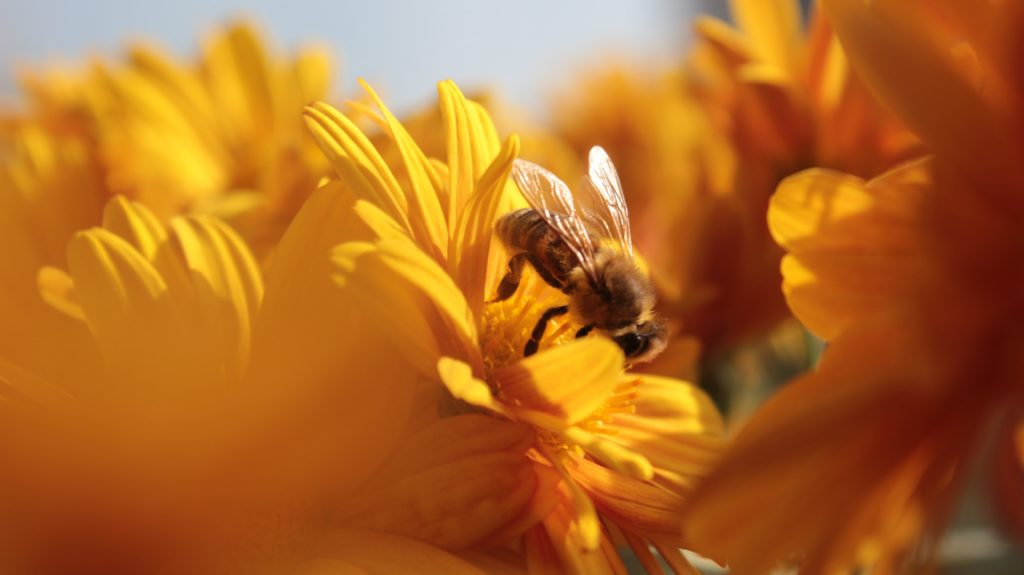 Be sweet like honey to the bees this World Bee Day