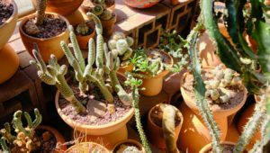 indigenous plants