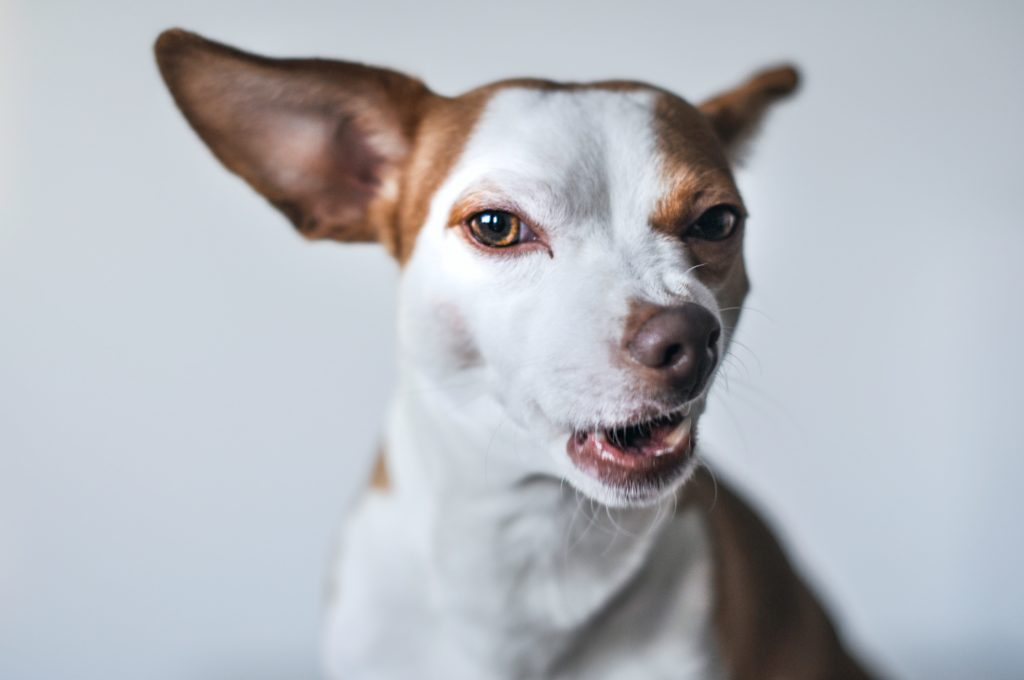Dogs don't understand everything you say, study finds