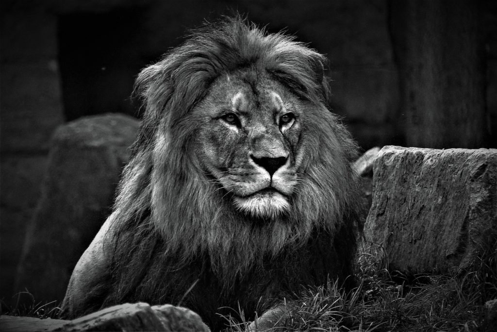 """SA bans captive breeding for trophy hunting, not """"authentic"""" hunting experiences"""