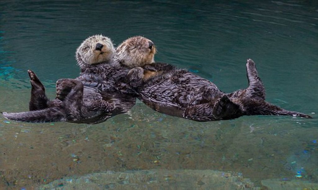 Otterly obsessed with otters- meet your next favourite animal