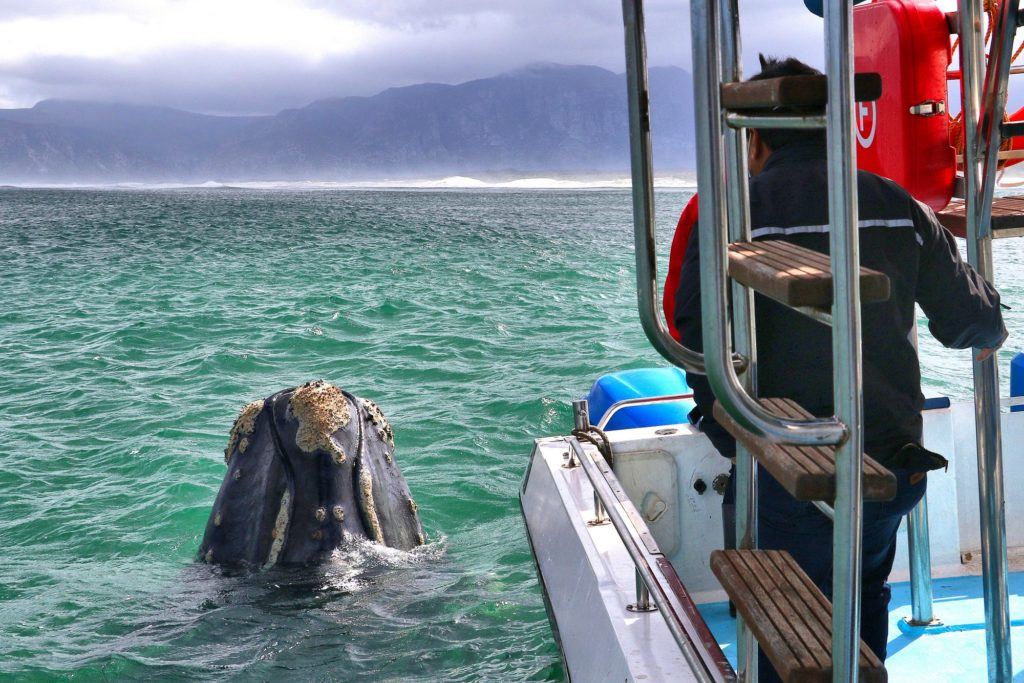 Have a Whale Day this Saturday in Gansbaai