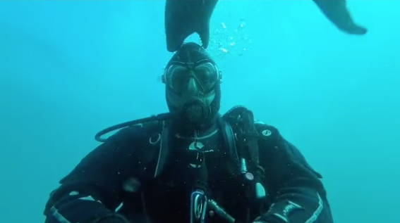 WATCH: Capetonian Scuba diver almost becomes seal snack! (in the cutest way)