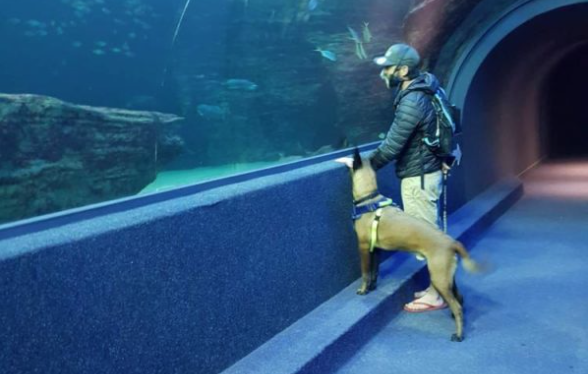 Two Oceans Aquarium - a K9 wonderland for search and rescue dogs