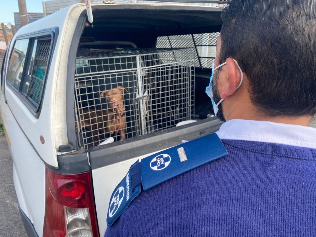 Two suspects arrested after the Cape of Good Hope SPCA received a tip off about dogfighting