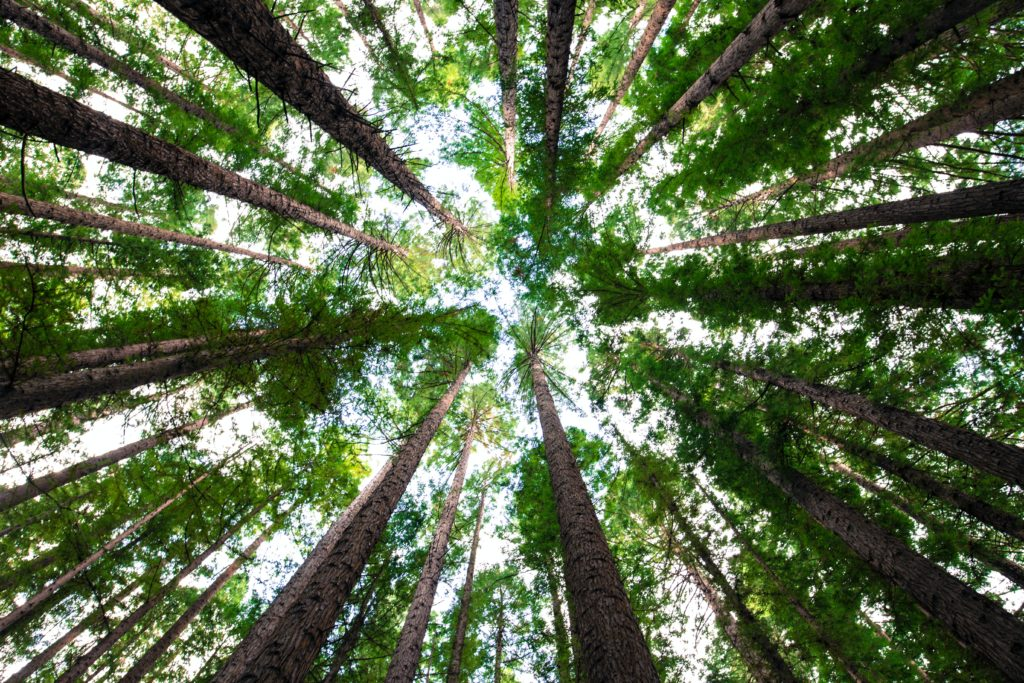 This Father's Day, sponsor a tree in your dad's name and restore SA's forests