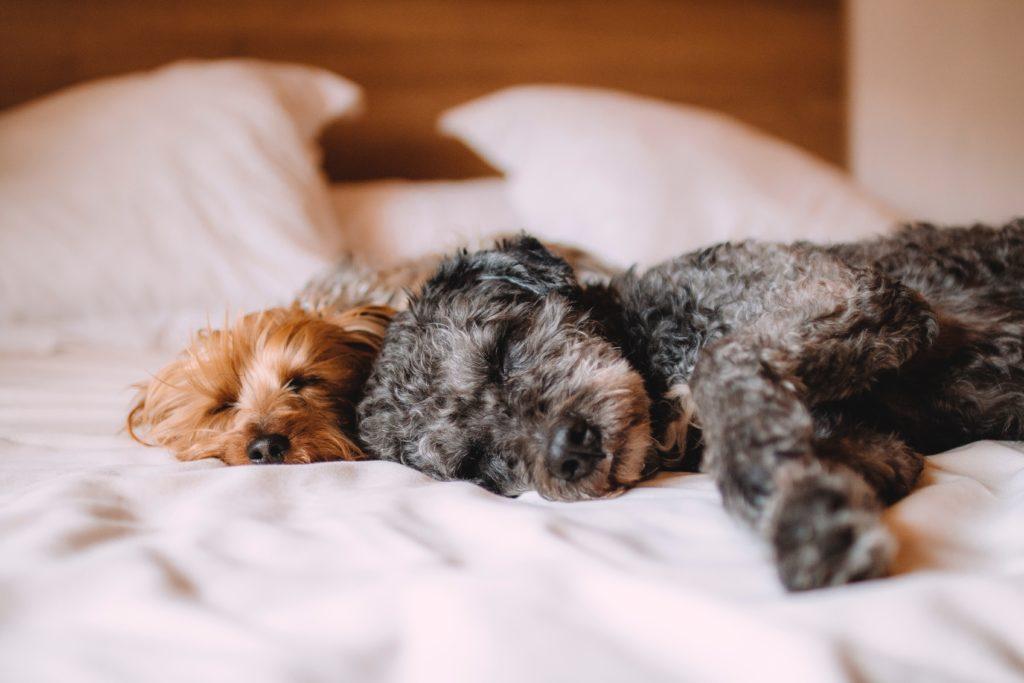The benefits of good sleep