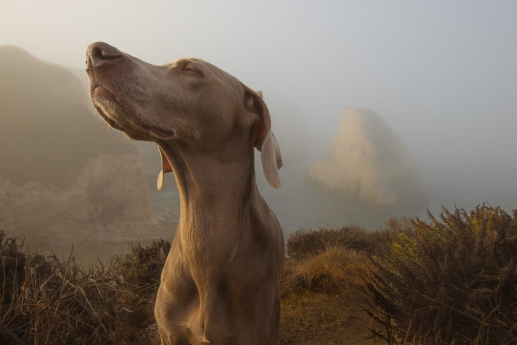 The power of scent, a doggy's superpower