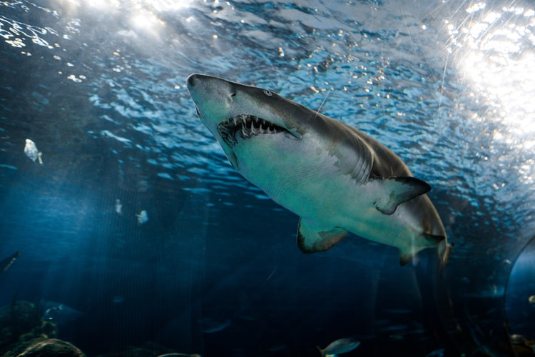 Is Gansbaai still the 'Great White Capital of the world?'