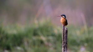 River Club development Biodiversity