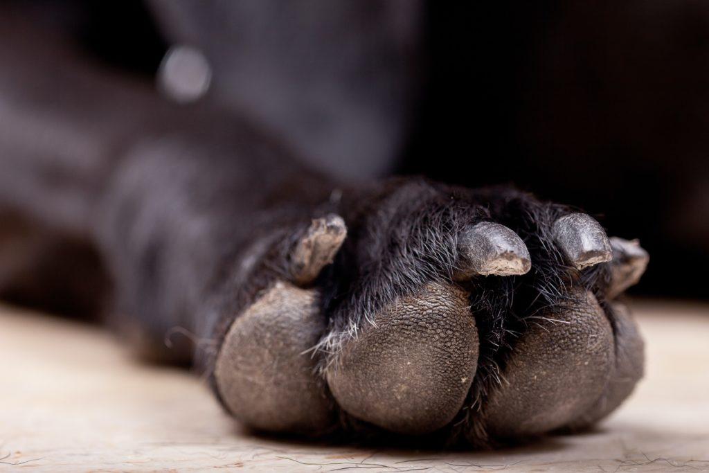 Sensitive: Dog killed with man-made sword in drunken rage
