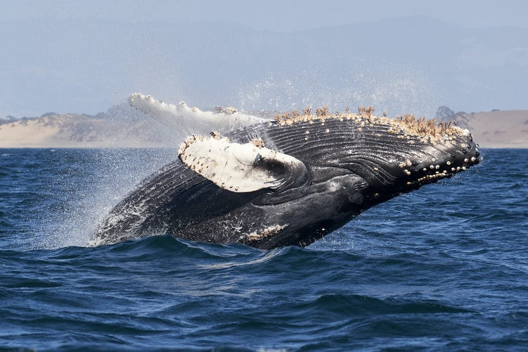 Man escapes death after being trapped in the mouth of a humpback whale