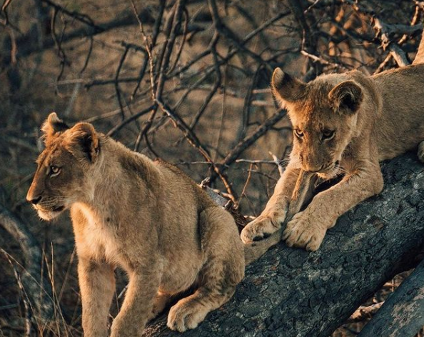 5 Reasons Covid-19 is the best time to go on safari