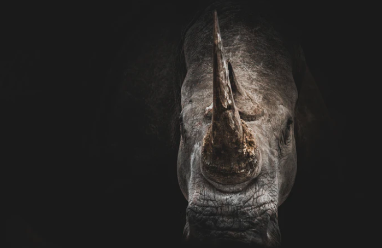 Bail granted for alleged rhino kingpin Dawie Groenewald- is anyone surprised?