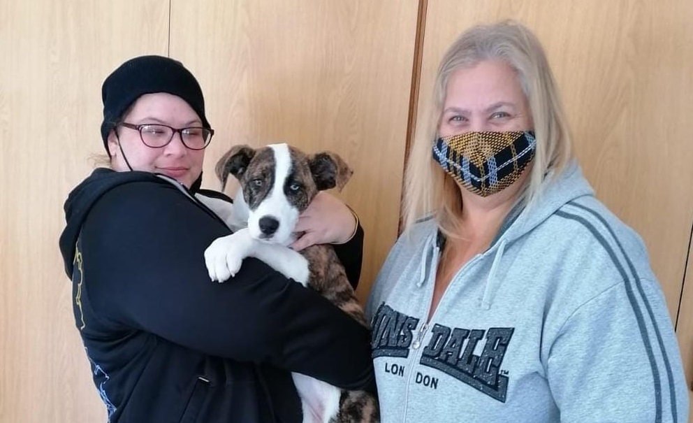 Pet adoption day grows and blossoms in puppularity