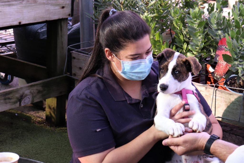 Starke Ayres Garden Centre in Rosebank are hosting another adoption day