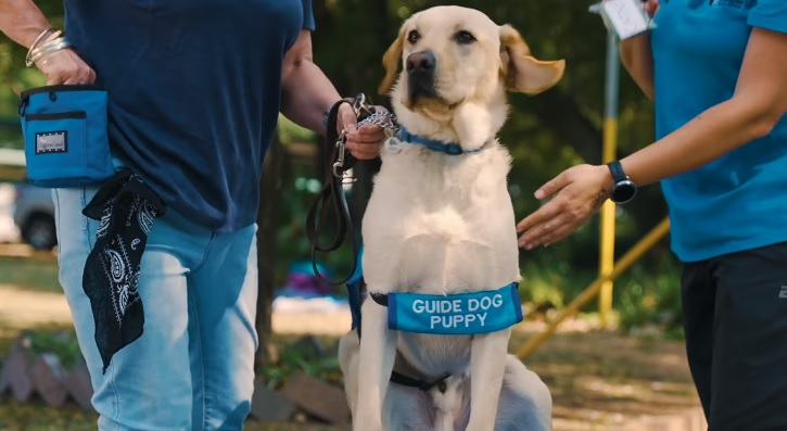 Puppies set to put their best paw forward at the SA Guide-Dogs Pups Games