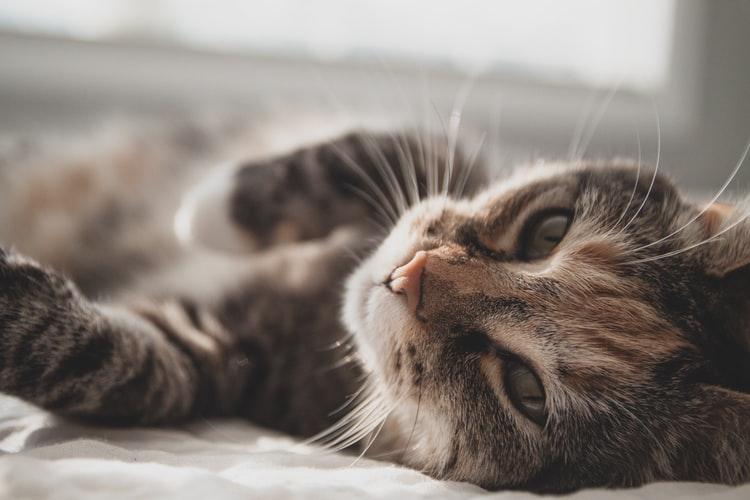Animal Welfare Society on the hunt for Manenberg cat killer