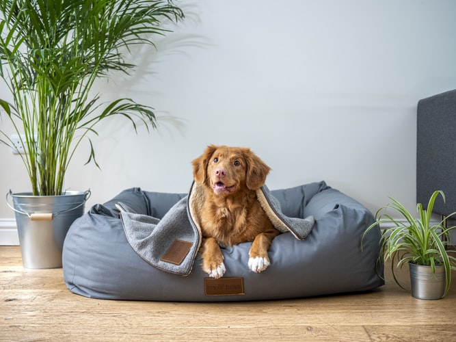 Huddle up and protect your pets from the cold this winter