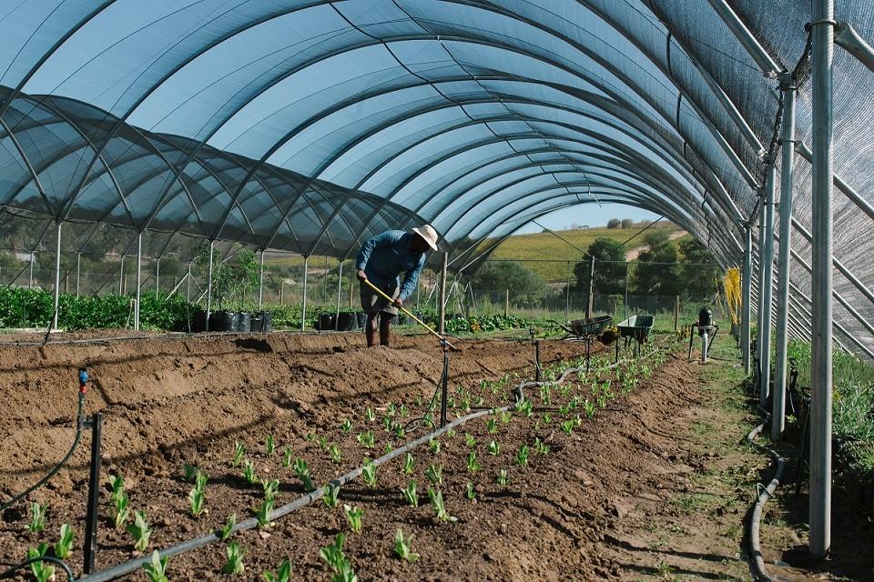 Spier Food Garden 2021 winter workshops