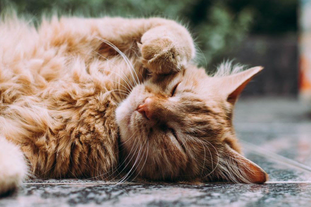 Cape Town cat killer strikes again - 11 animals mutilated