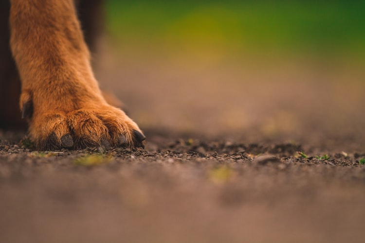 Pitbull euthanised after attack sparks outrage in Bonteheuwel