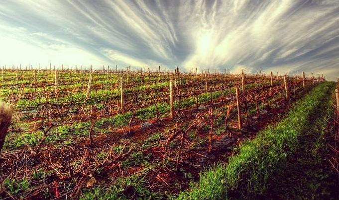 Indulge in a soup and wine tasting wonderland with Durbanville Wine Valley