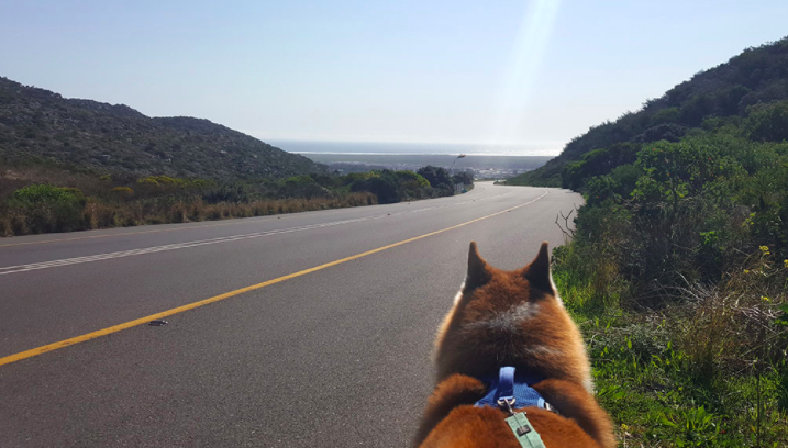 Man and his Husky walk from Joburg to the Cape to raise funds for the woofs