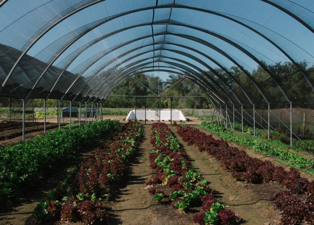 Spier Food Garden to host another 2021 Winter Workshop